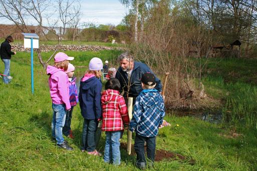 Nabu- Mitglied Hartmut Völkerling erklärt nach der Pflanzung den Sinn dieser Aktion