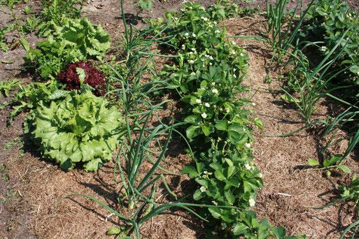 Zwei weitere Prinzipien: Mischkultur und Bodenschutz durch Mulchen