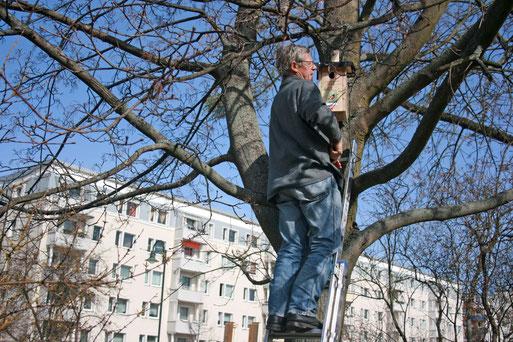 Der neu gebaute Nistkasten wird an einem Baum im KITA- Gelände angebracht