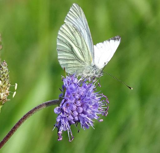 ...bei Insekten sehr beliebt. Winsen, August 2015