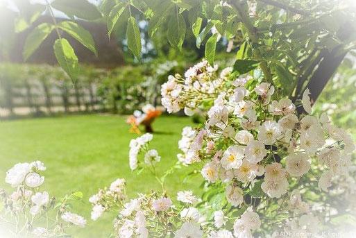 l'échappée belle chambre d'hôtes avec jardin