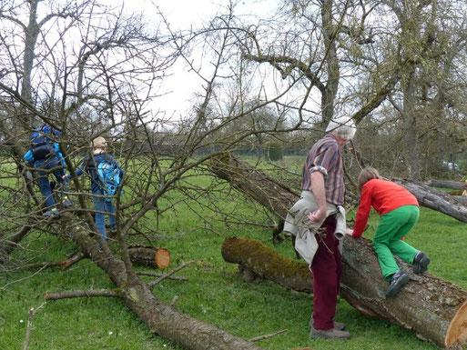 Immer wieder Umweltbildung: Auf dem Foto zählen Schüler bei einer Veranstaltung der Hector Kinder Akademie  Spechthöhlen an gefällten Obstbäumen in der   Marbacher Reuth. (März 2014)