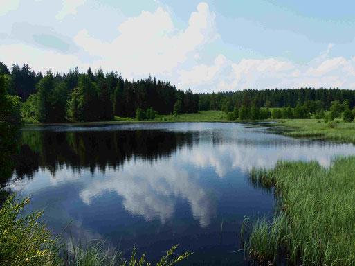 Stauweiher am Schwarzbach (Foto: Heinz Weishaupt )