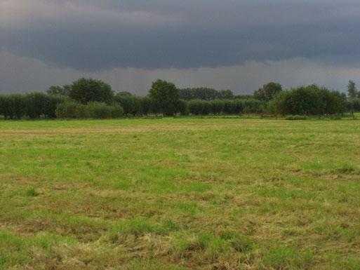 Wiesenlandschaft nördlich der Langendonker Mühle