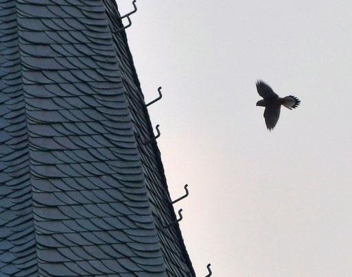Erste Erkundungsflüge 2016 um die St. Laurentiuskirche, Foto: Karl Groß