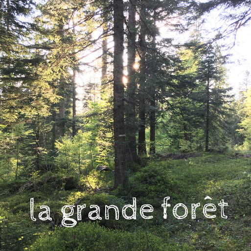 Trek CNV dans le Jura, crêtes et combes jurassiennes