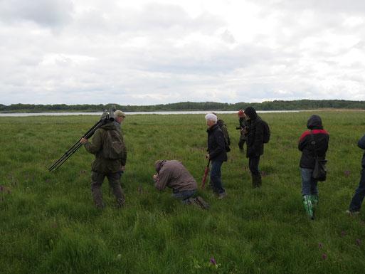 Auch Moorfrösche und diverse Vögel u.a. 5 Seeadler wurden beobachtet.