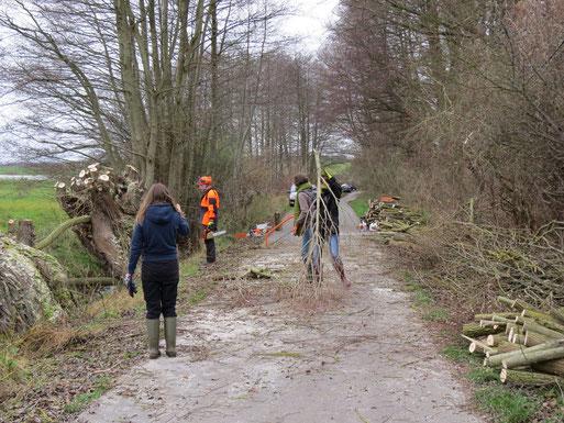 Auch wenn es sperrig ist, es muss beiseite geschafft werden. Wir haben an diesem Samstag 9 Bäume in Form bringen können.