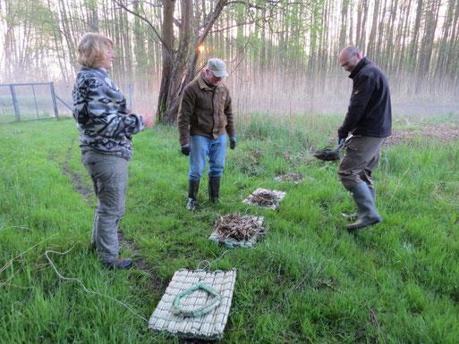Die Nester werden bei Wustrow vorbereitet