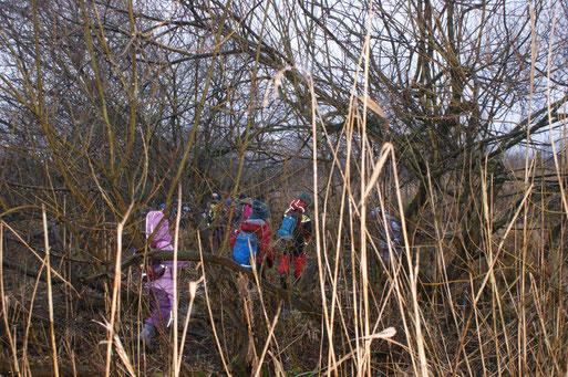 Es wurden zwei Biberburgen gefunden.  Zweige, Baumstämme und herumliegende Späne zeugten von dem großen Appetit der Biber.