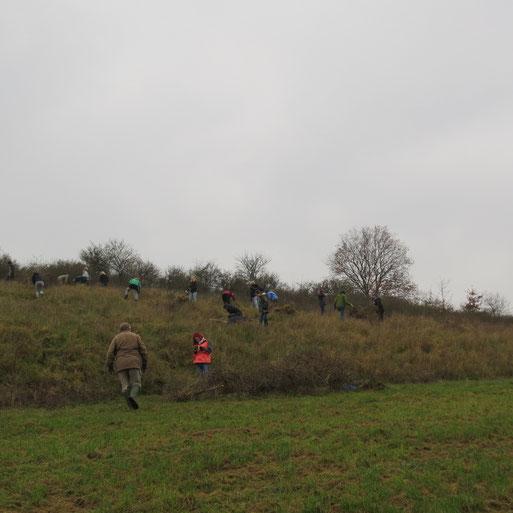 Studenten der Hochschule unter Leitung von Herrn Prof. Grünwald befreien den Trockenrasenhang vom Schlehenbewuchs.