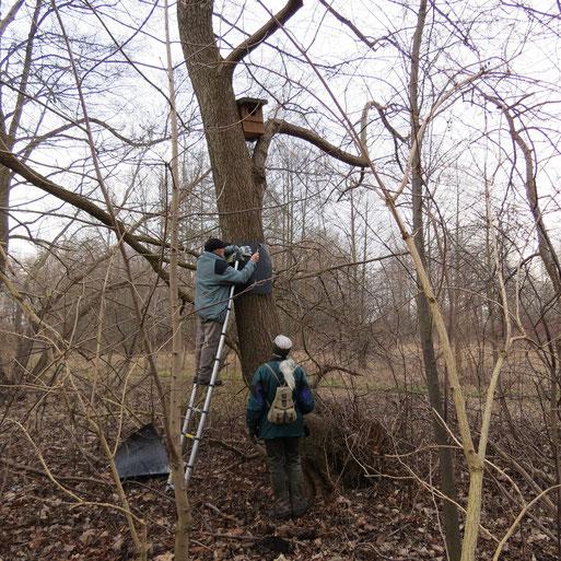 Dieser Baum im Kulturpark bekommt eine Manschette, um zu verhindern das die Nistkastenbewohner unerwartet Besuch bekommen. 18.02.2015