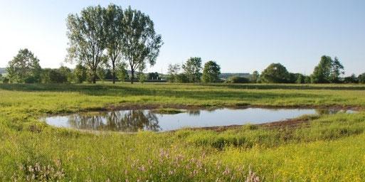 Seit Jahren kümmern wir uns um die Pflege und Weiterentwicklung der Feuchtwiesen in der Krebsbachaue bei Rohrau: Zum Wohl von Kiebitz und weiteren Vogelarten, die dort brüten oder rasten.