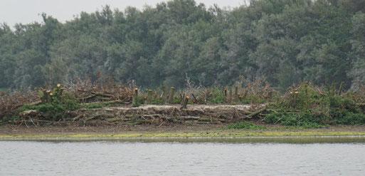 Kormoranbrutinsel mit abgeholzten Nestbäumen Foto: J. Wildberger