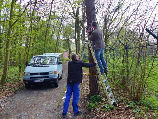 entlang eines Waldlaufpfades werden die Nistkästen aufgehängt