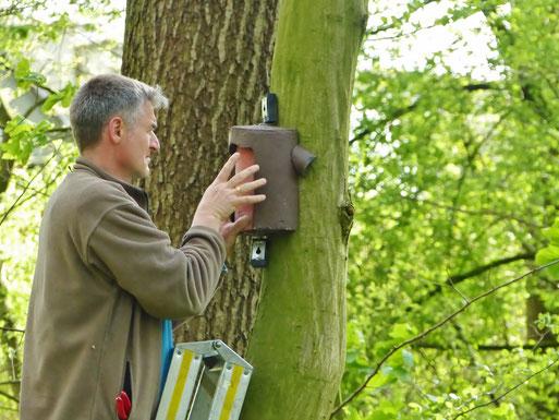 für Baumläufer, Garten- und Waldbaumläufer kommen beide hier vor