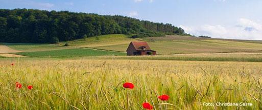 Getreidefelder und Grünland bei Ostheim