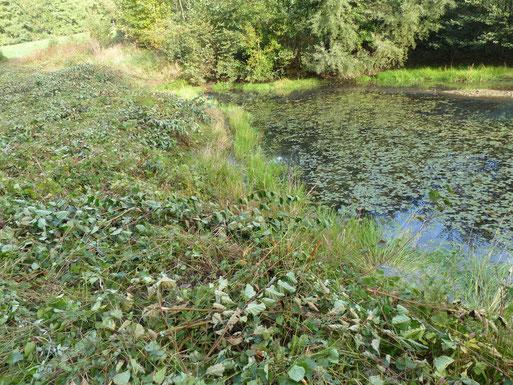 Hinweisschild Amphibienschutzgebiet
