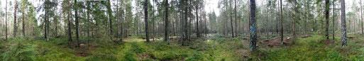 Panorama, Auerwild, Auerwildschutz, Auerhuhnbiotop, Auerhuhn, Auerhahn, Moor, Hochmoor, Misse