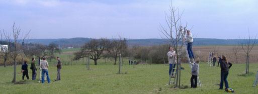 """Obstbaumschnittkurs auf der Streuobstwiese """"In der Oberen Bellersbach"""""""