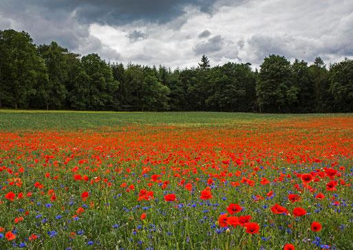 """""""Without Roundup"""" - ökologisch bewirtschaftete Fläche in der Gemarkung Sichertshausen - Foto: Carsten Busse"""