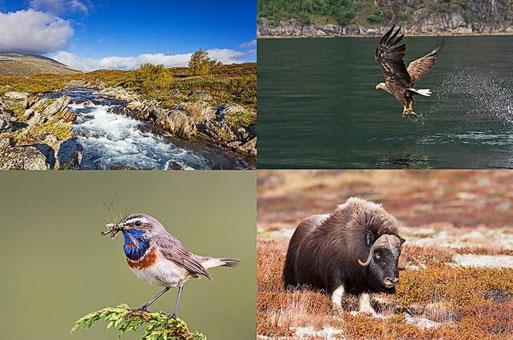 Toller Bildervortrag von Carsten Busse zu den Tieren des Fjells und der Küste - Fotos: Carsten Busse