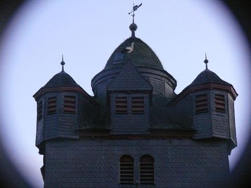 16.02.14: Weißstorch auf der Fronhäuser Kirche - Foto: Stefan Wagner