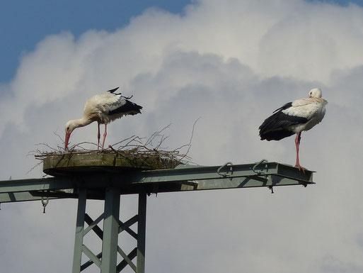 Weißstorchpaar am BT Niederwalgern - Foto: Stefan Wagner