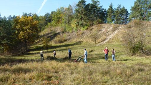 Alle Jahre wieder: Trockenrasenpflege bei strahlend goldenem Herbstwetter in den Krielower Bergen. Foto agr