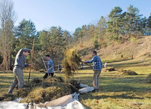 Trockenrasenpflege, FFH- Gebiet,