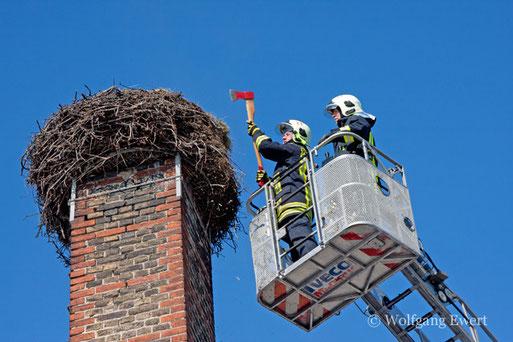 Bevor der Schornstein im Herbst neu aufgemauert werden soll, wurde er zunächst vor Beginn der neuen Brutsaison dank der Hilfe der Freiwilligen Feuerwehren Alt Fahrland und Groß Glienicke von etwas Last befreit.