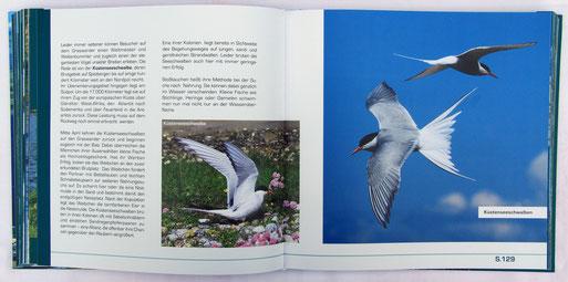 "Auszug aus dem Kapitel ""Vogelwelt des Graswarders"" von Klaus Dürkop"