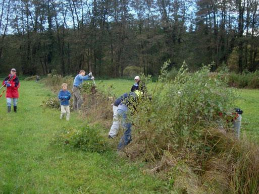 Arbeitseinsatz: Biotoppflege im Gewann Humbrühl