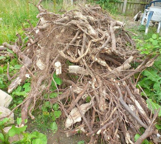 Danke an den Vorstand des KGV Kultur für diesen umfangreichen Holzhaufen!