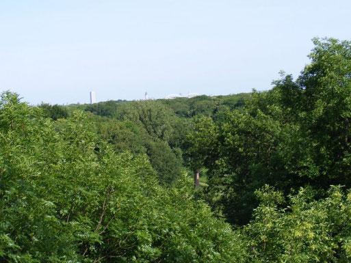 Blick aus 35 m Höhe über den Auwald in Richtung Stadtzentrum. Foto: Christa Rasch