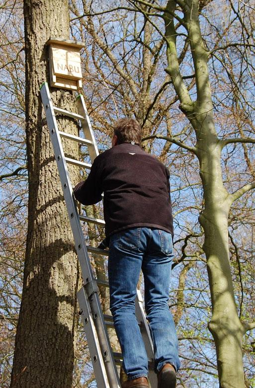 Neue Fledermauskästen im Burgwald Hopen - ein Projekt von NABU und der Stadt Lohne; Foto L. Frye 2011