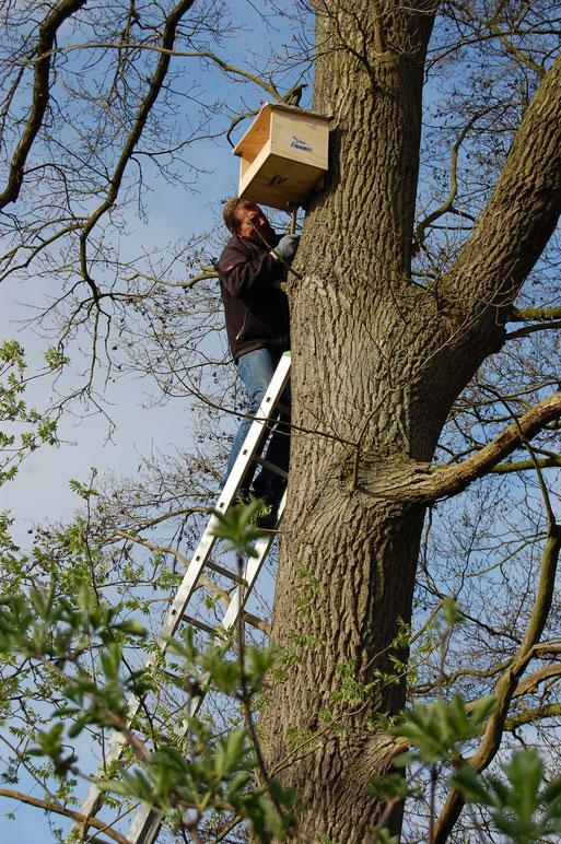 Ludger Egert beim Anbringen einer Turmfalken-Nisthilfe in luftiger Höhe - dazu gehört schon etwas Mut und Idealismus, hier in Südlohne;   Foto: Ludger Frye 2011