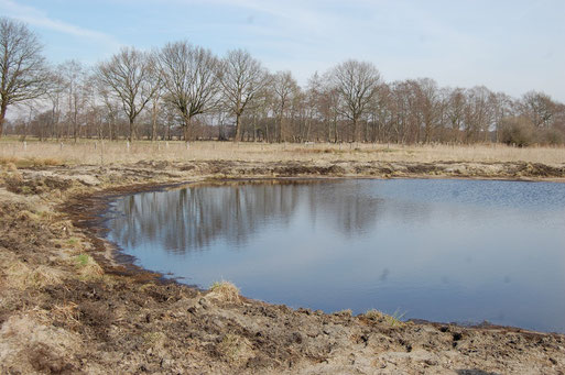 Neuer AmphiKult-Tümpel in der Langen Lohe - der NABU Dümmer pflegt und beweidet langjährig dieses wichtige Gebiet; Foto: Frye 2011