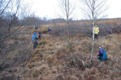 Koordinierte Biotoppflege im Hochmoor; Foto: L. Frye / NABU 2007