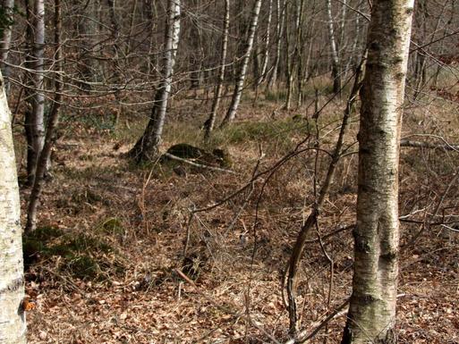 Großer Fuchs an Birke ruhend, innerer Waldmantel in der Davert, 9.4.2015.