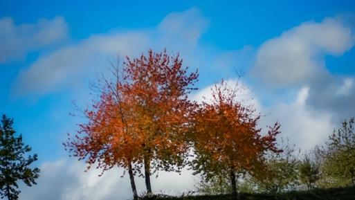Herbsteindrücke (Madeleine Stor, Oktober 2020)