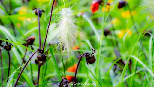 Natureindrücke (Madeleine Stor, Sommer 2020)