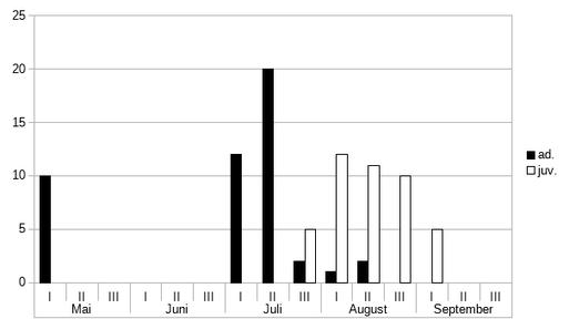 Durchzug des Bruchwasserläufers getrennt nach Alter (n=80)