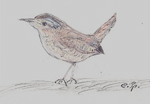 Zeichnung: Edeltraud Spee