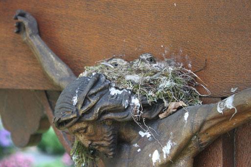 Bild: Hauptfriedhof Ravensburg Fliegenschnäppernest