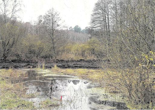 Die große Helle wurde zugeschüttet, um Moor zu renaturieren