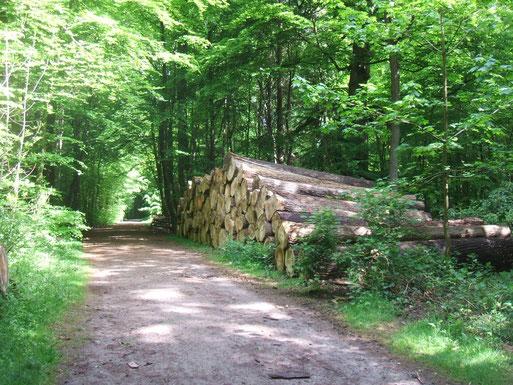 Holzeinschlag im Schlosspark 2012