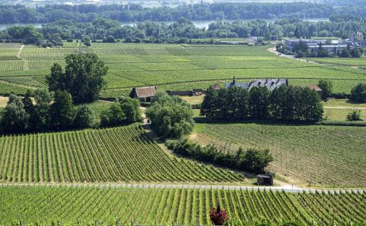 Blick über den Rheingau - natürlich vom Schloss Johannisberg