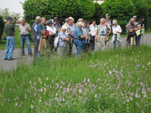 Axel Junker präsentiert die Schönheit und Eigenheiten der heimischen Orchideen (vorne im Bild).