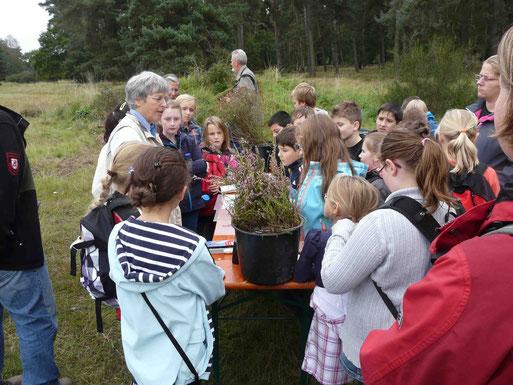 Hannegret Krion stellt die Charakterpflanze der Wahner Heide vor: die Besenheide